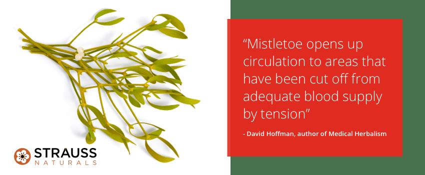 European Mistletoe Leaf Overview