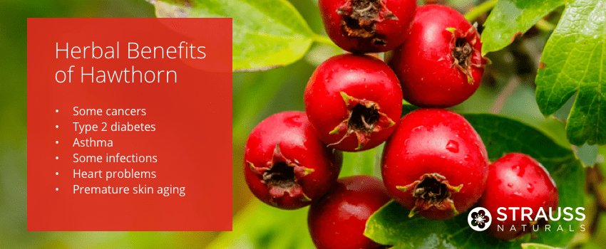 Herbal Benefits of Hawthorn