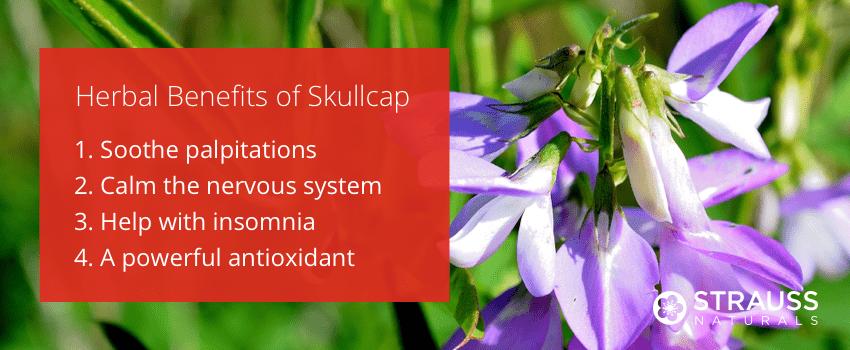 Herbal Benefits of Skullcap