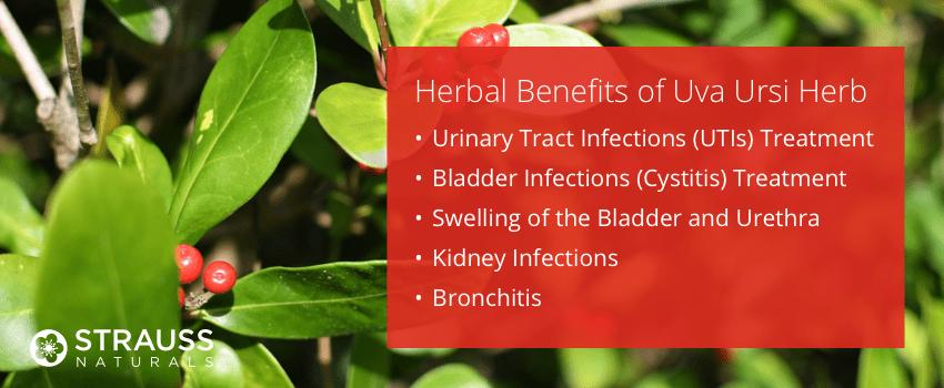 Herbal Benefits of Uva Ursi Leaf