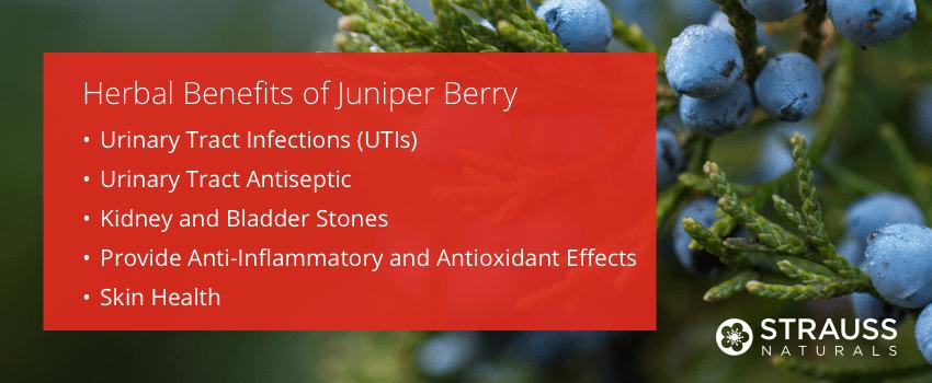 Herbal Benefits of Juniper Berry